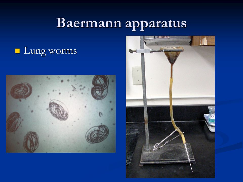Baermann apparatus Lung worms