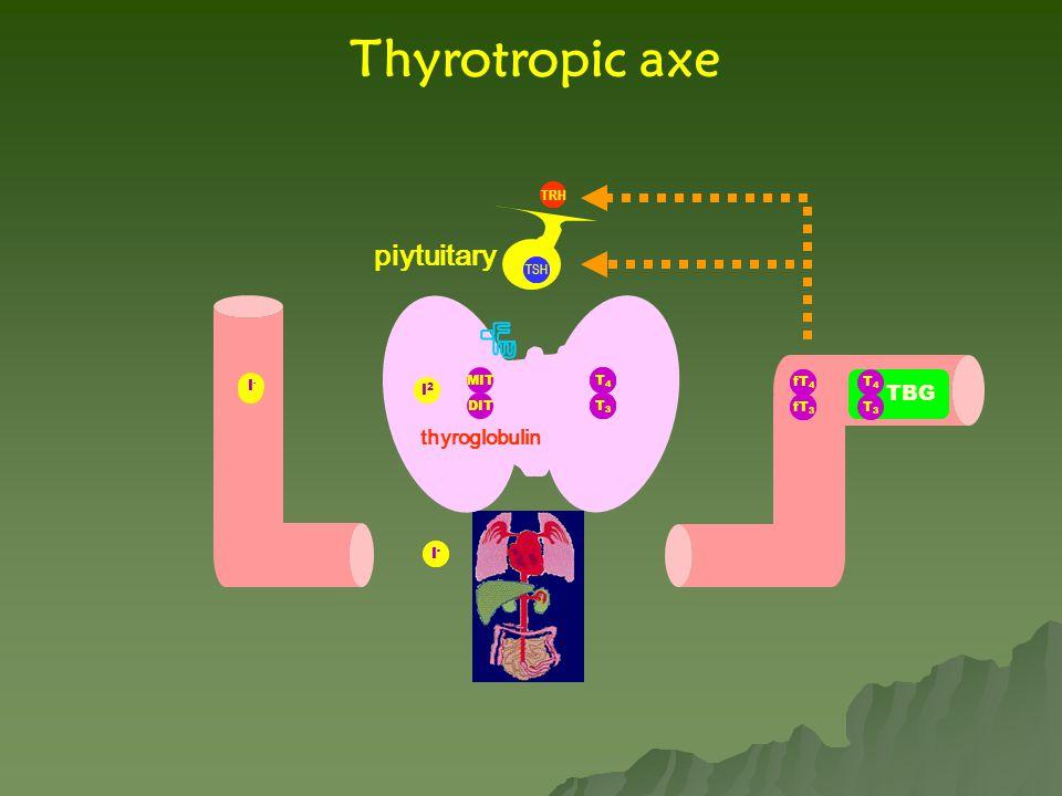 Thyrotropic axe piytuitary TBG thyroglobulin TRH TRH TSH I- T4 T3 fT4