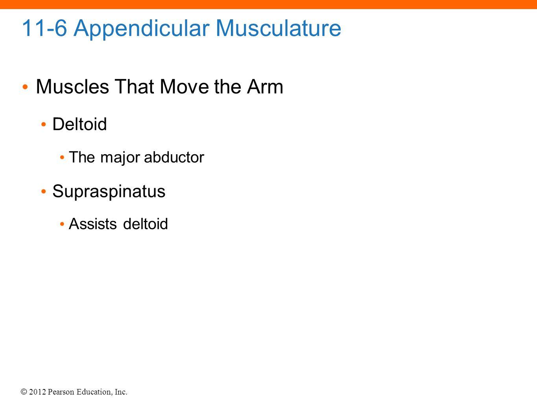 11-6 Appendicular Musculature
