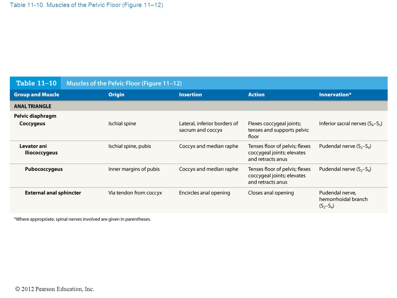 Table 11-10 Muscles of the Pelvic Floor (Figure 11–12)