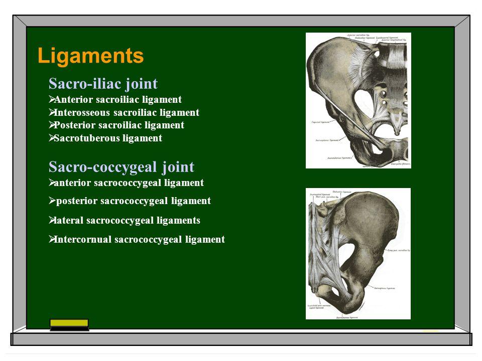 Ligaments Sacro-iliac joint Sacro-coccygeal joint