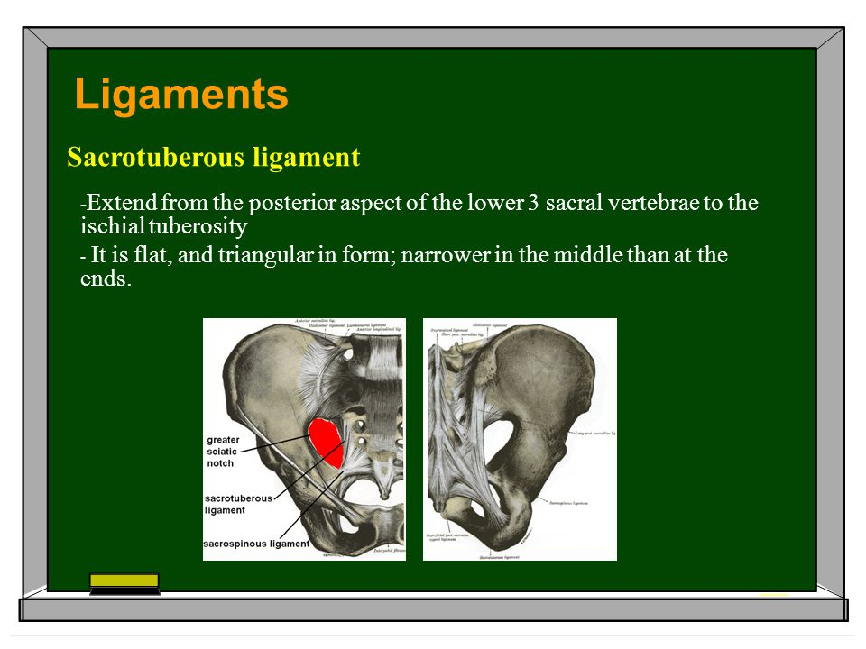 Ligaments Sacrotuberous ligament