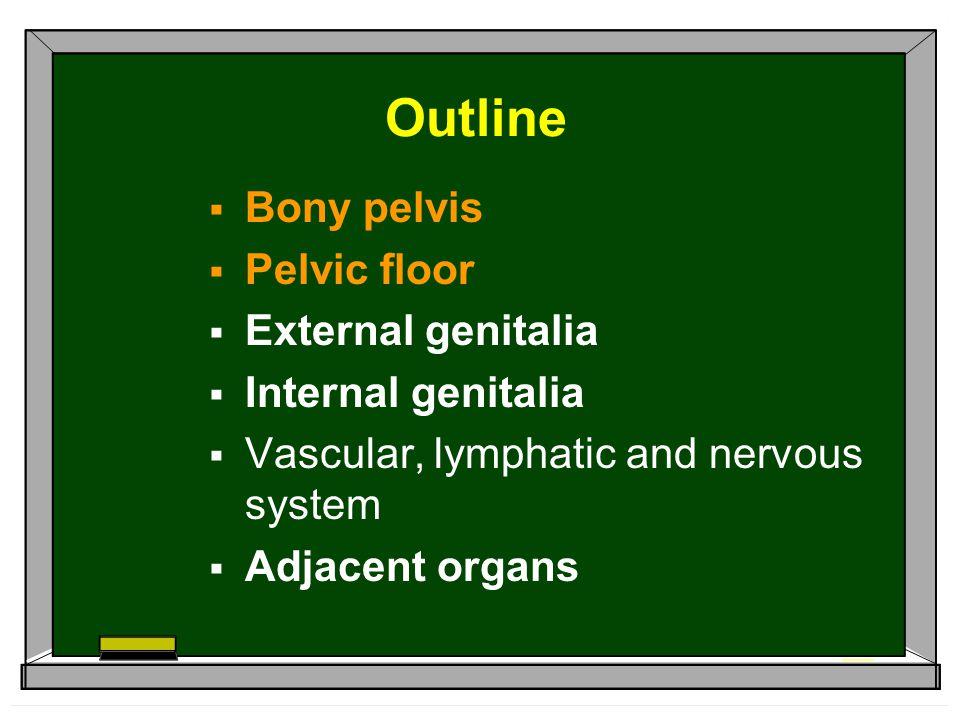 Outline Bony pelvis Pelvic floor External genitalia Internal genitalia