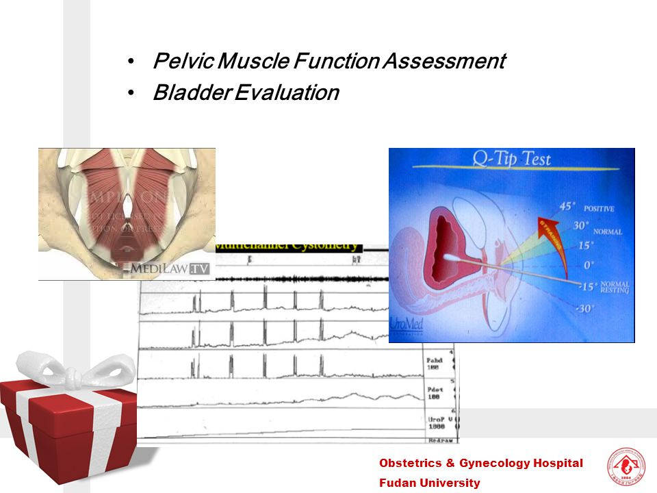 Pelvic Muscle Function Assessment