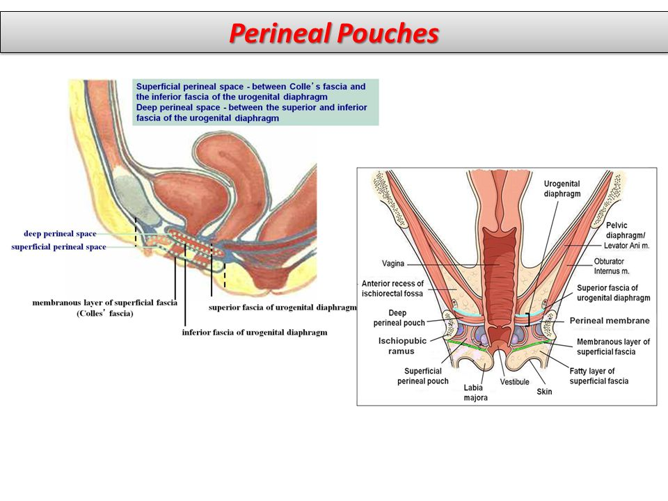 Perineal Pouches