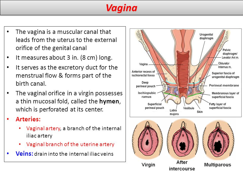 Vagina Size and Sexual Pleasure: Does Size Matter - W