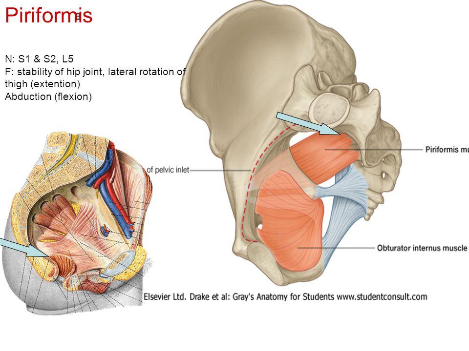 Piriformis N: S1 & S2, L5.