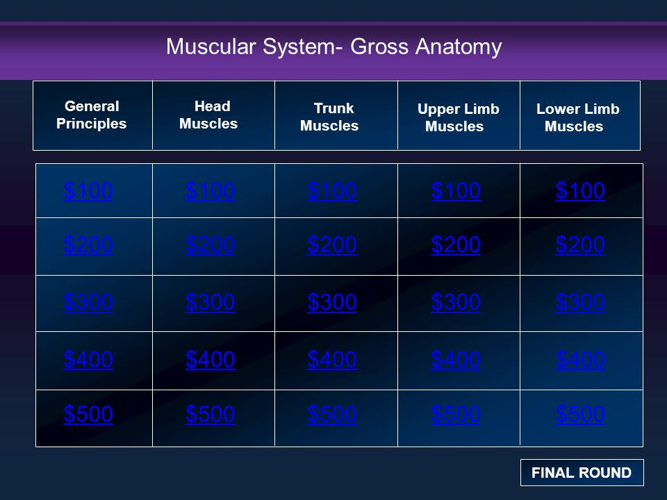 Muscular System- Gross Anatomy