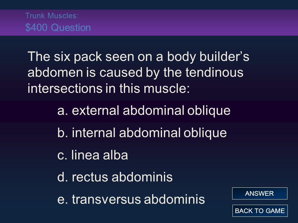 Trunk Muscles: $400 Question