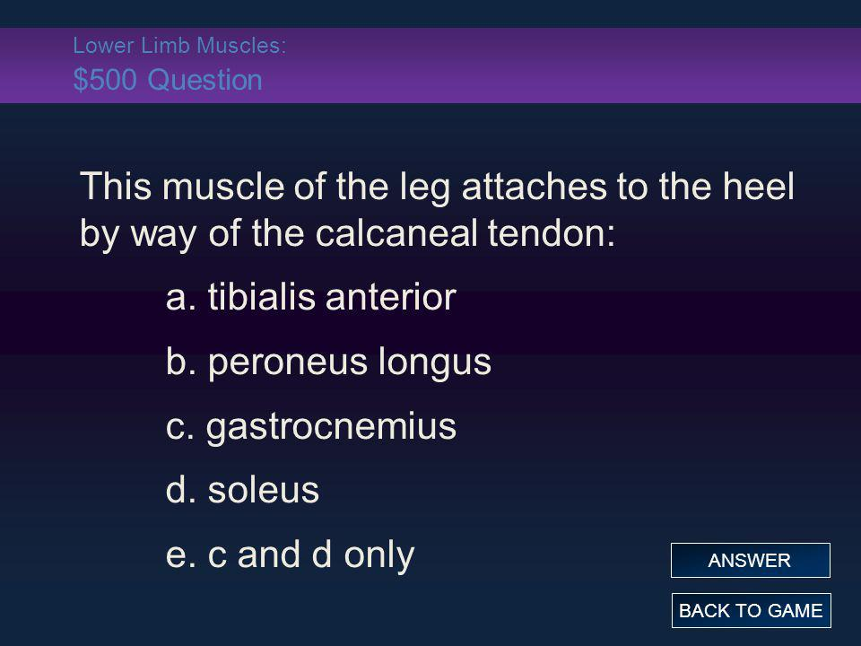 Lower Limb Muscles: $500 Question