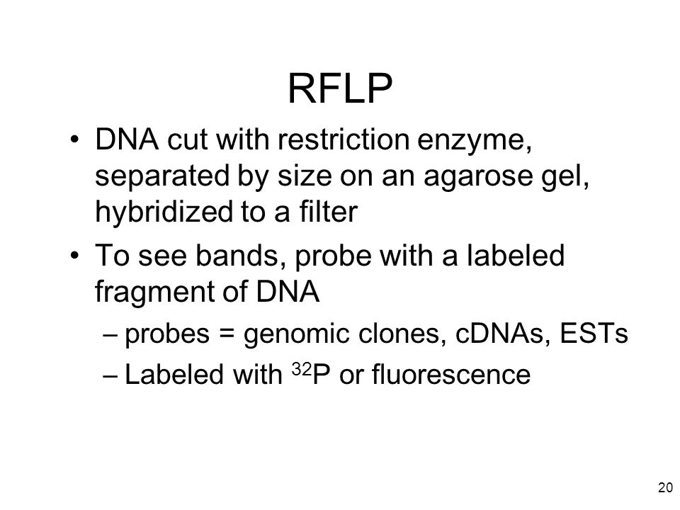 RFLP DNA cut with restriction enzyme, separated by size on an agarose gel, hybridized to a filter.