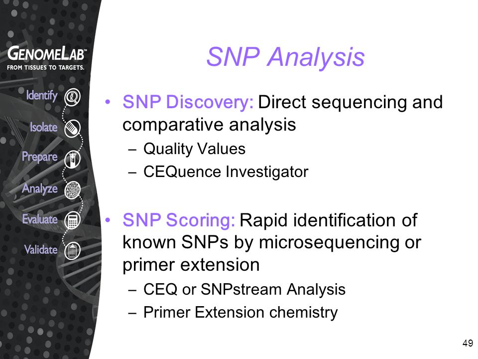 SNP Analysis SNP Discovery: Direct sequencing and comparative analysis