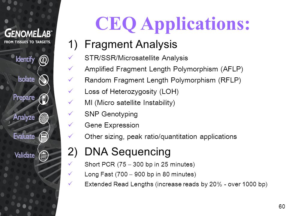 CEQ Applications: Fragment Analysis 2) DNA Sequencing