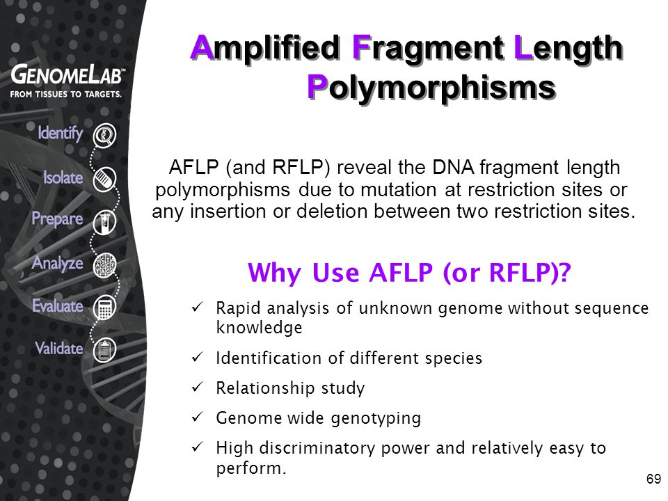 Amplified Fragment Length Polymorphisms