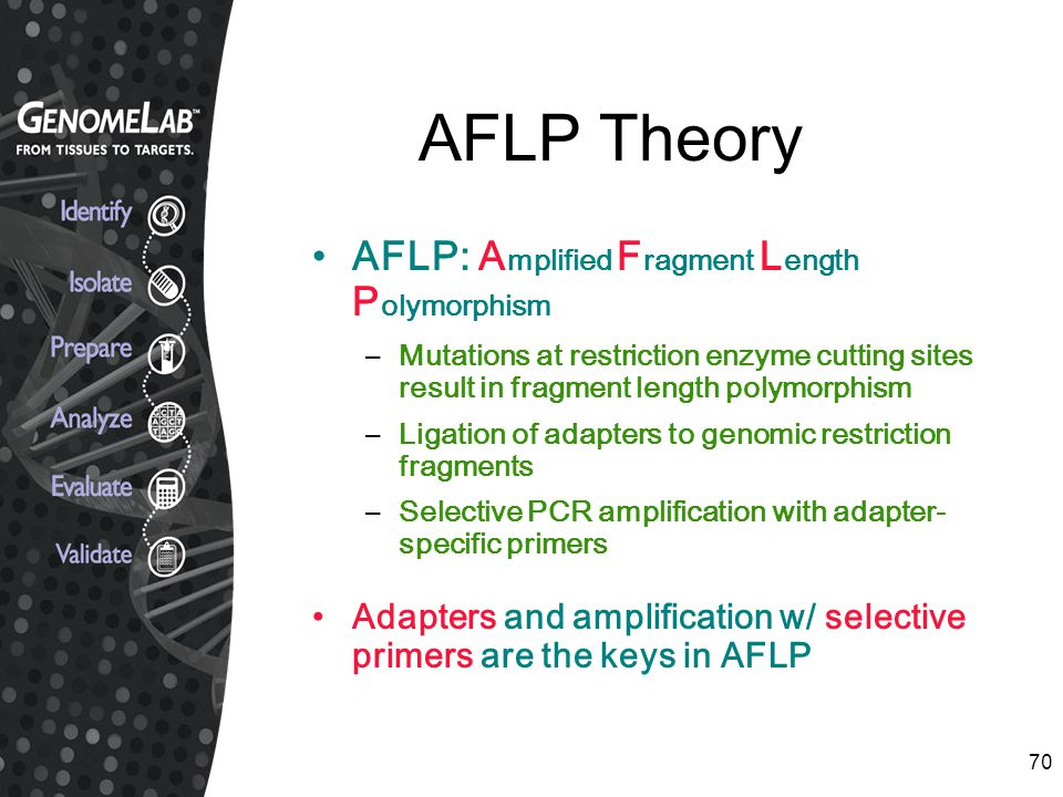AFLP Theory AFLP: Amplified Fragment Length Polymorphism
