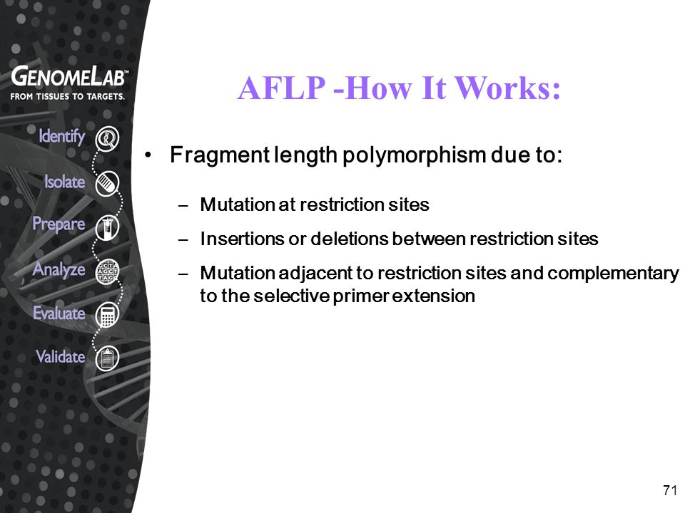 AFLP -How It Works: Fragment length polymorphism due to: