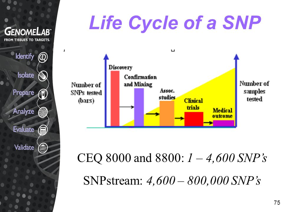 Life Cycle of a SNP CEQ 8000 and 8800: 1 – 4,600 SNP's