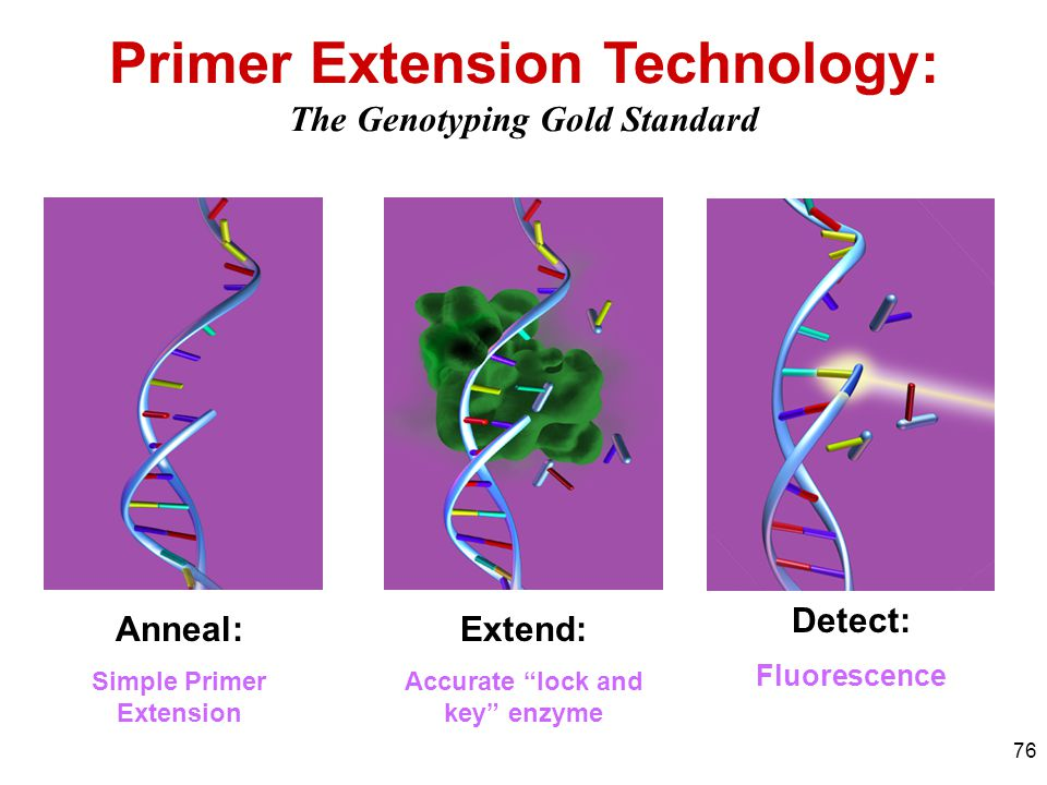 Primer Extension Technology: