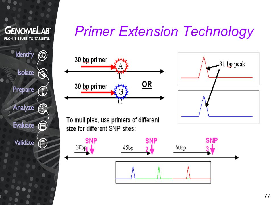 Primer Extension Technology