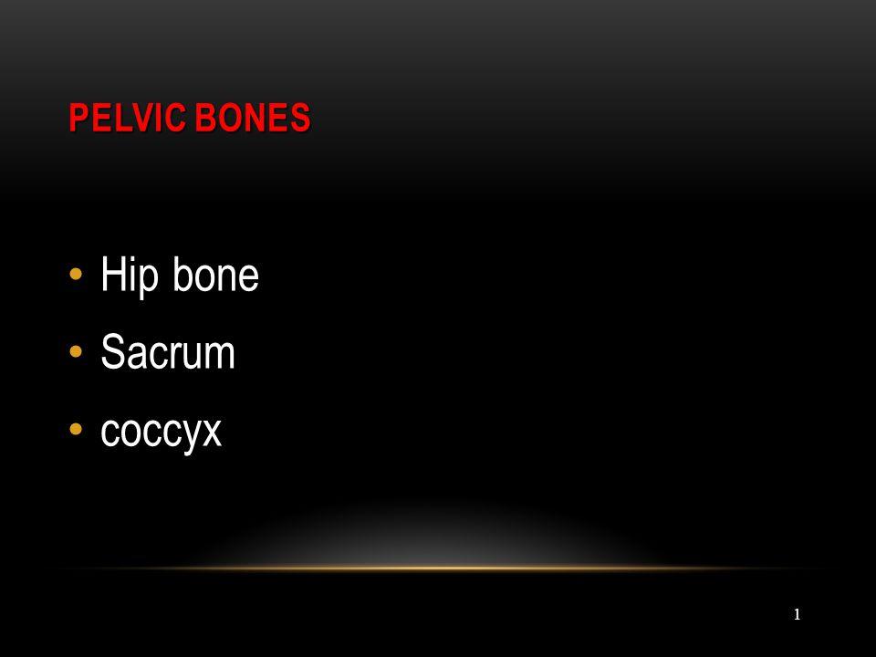PELVIC BONES Hip bone Sacrum coccyx 1