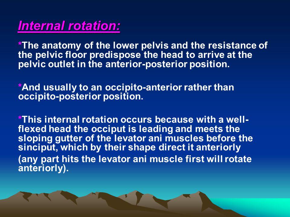 Internal rotation: