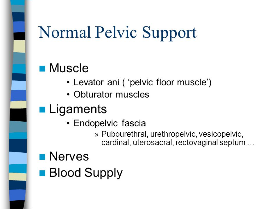Normal Pelvic Support Muscle Ligaments Nerves Blood Supply