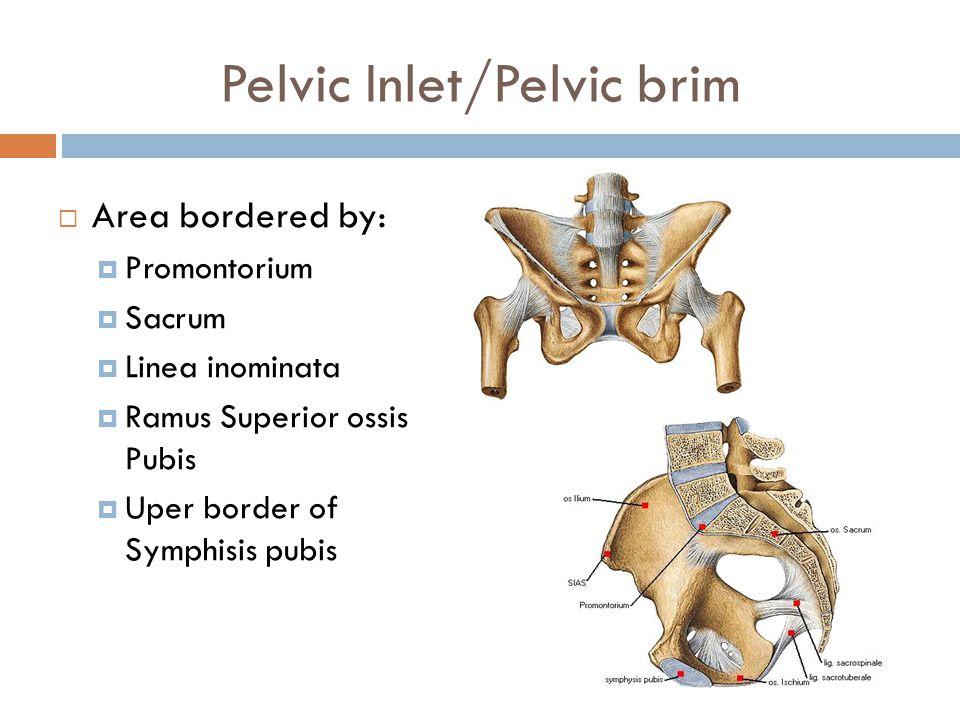 Pelvic Inlet/Pelvic brim