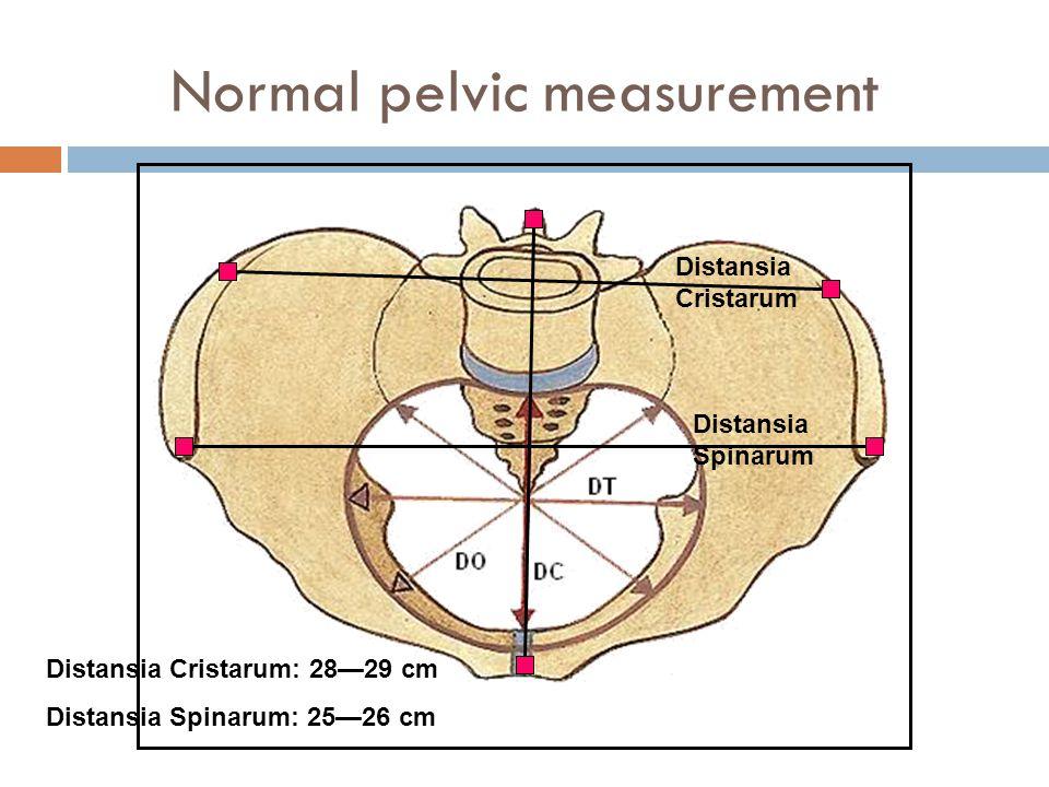 Normal pelvic measurement