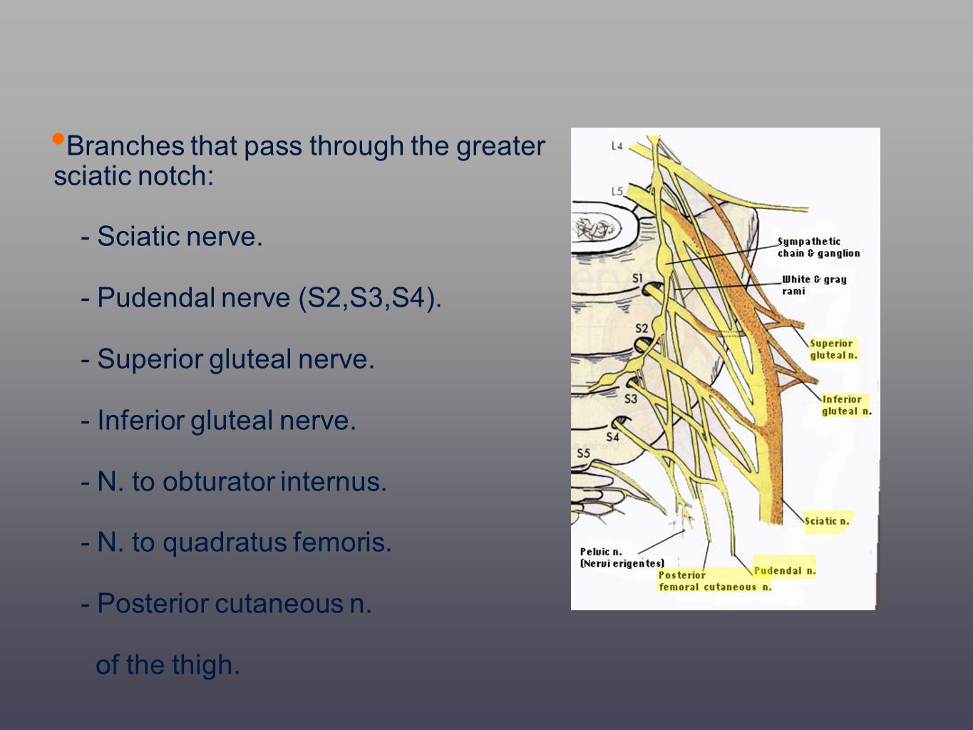 Branches that pass through the greater sciatic notch: