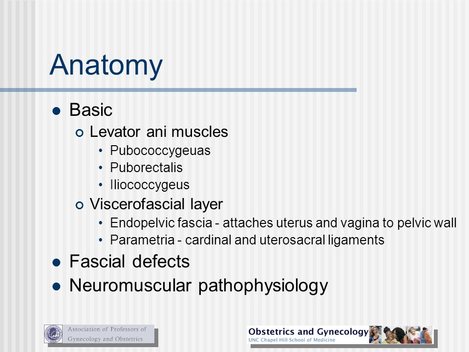 Anatomy Basic Fascial defects Neuromuscular pathophysiology