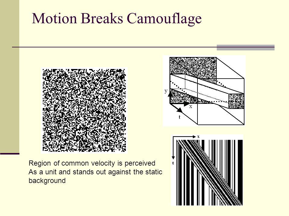 Motion Breaks Camouflage