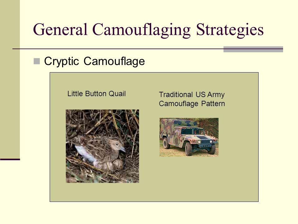 General Camouflaging Strategies