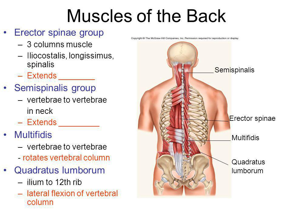 Part I: Muscles of the Head and Neck Part II: Muscles of ...