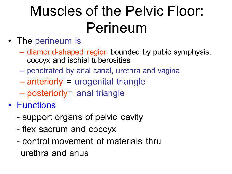 Muscles of the Pelvic Floor: Perineum