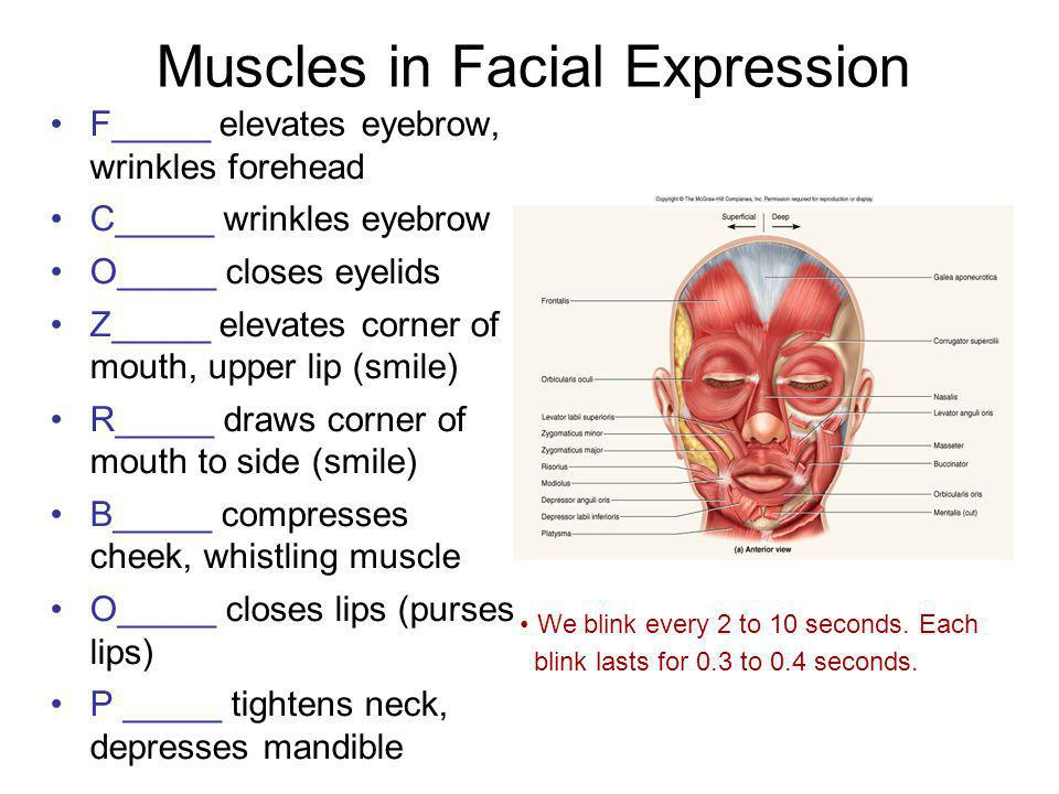 Muscles in Facial Expression