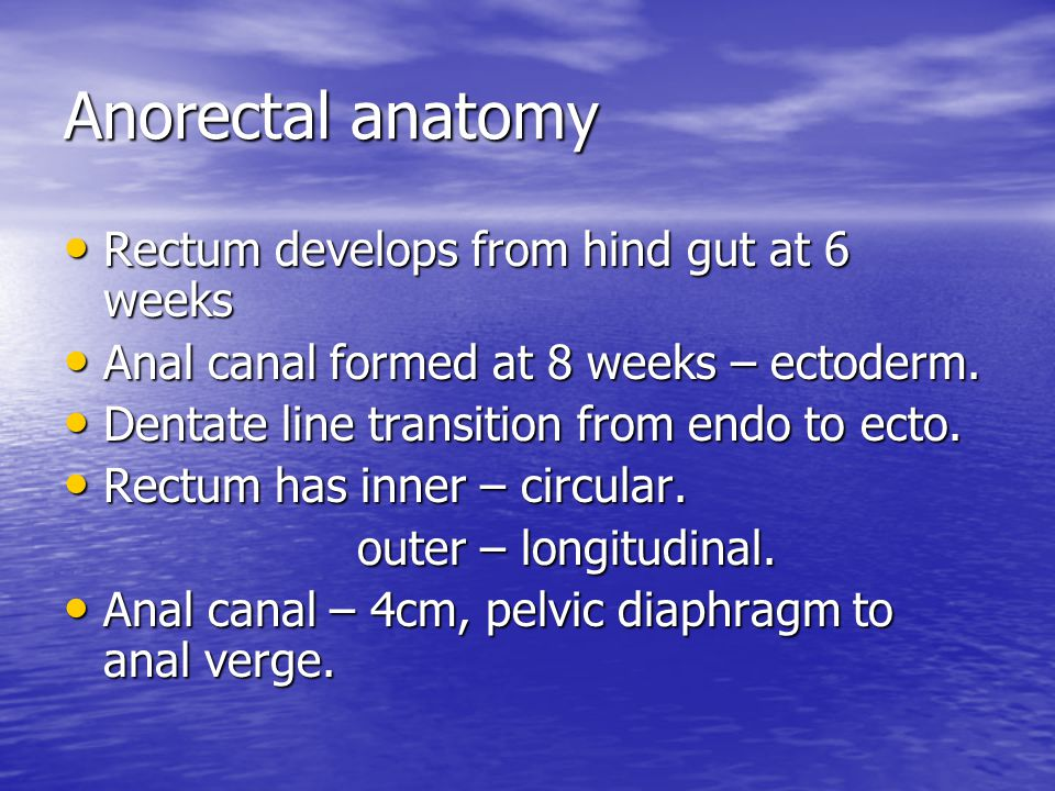 Anorectal anatomy Rectum develops from hind gut at 6 weeks
