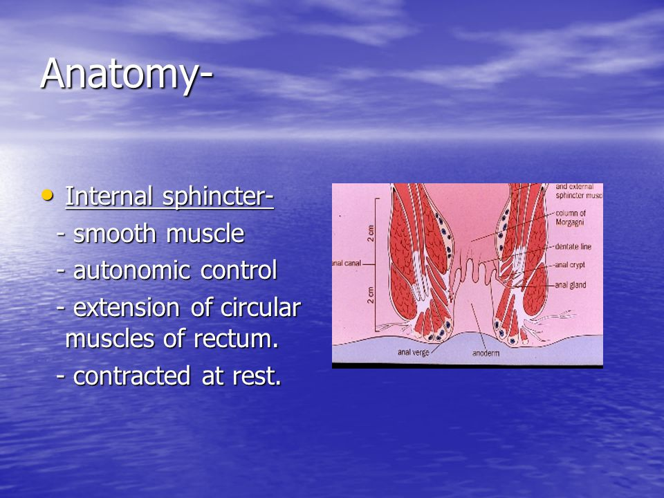 Anatomy- Internal sphincter- - smooth muscle - autonomic control