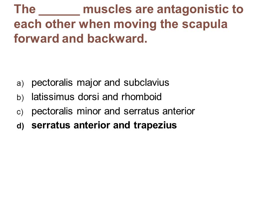 The ______ muscles are antagonistic to each other when moving the scapula forward and backward.