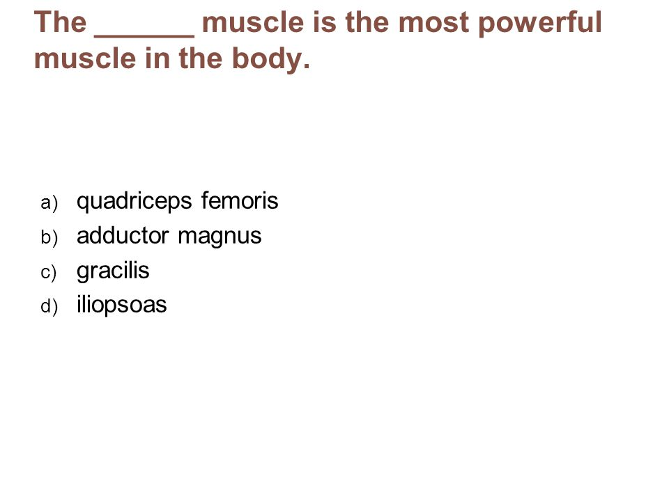 The ______ muscle is the most powerful muscle in the body.