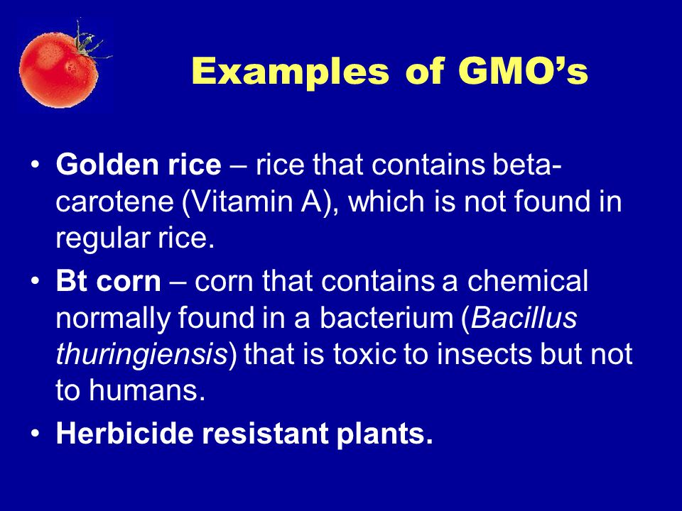 Examples of GMO's Golden rice – rice that contains beta-carotene (Vitamin A), which is not found in regular rice.