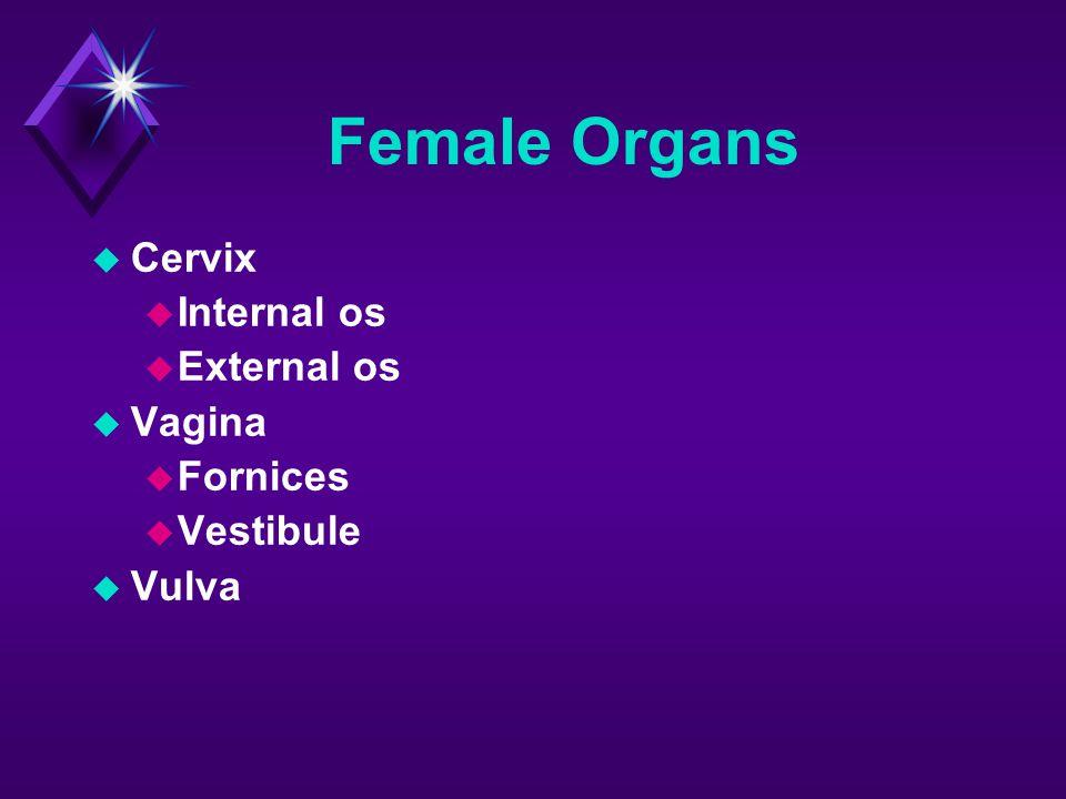 Female Organs Cervix Internal os External os Vagina Fornices Vestibule