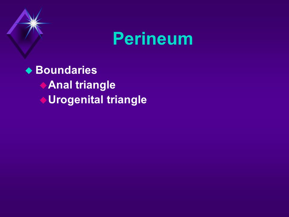 Perineum Boundaries Anal triangle Urogenital triangle