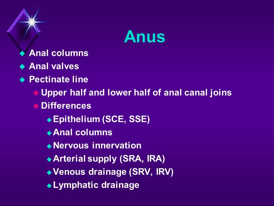 Anus Anal columns Anal valves Pectinate line