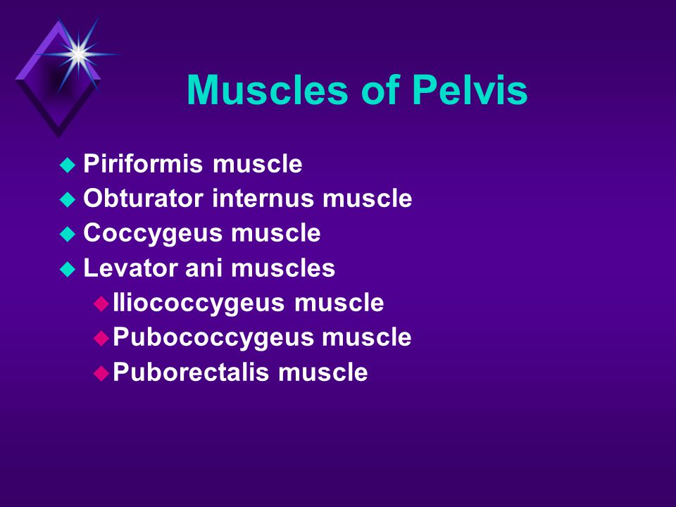 Muscles of Pelvis Piriformis muscle Obturator internus muscle