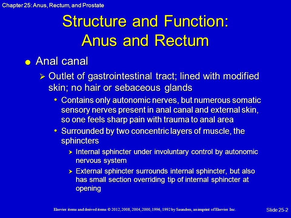 Structure and Function: Anus and Rectum