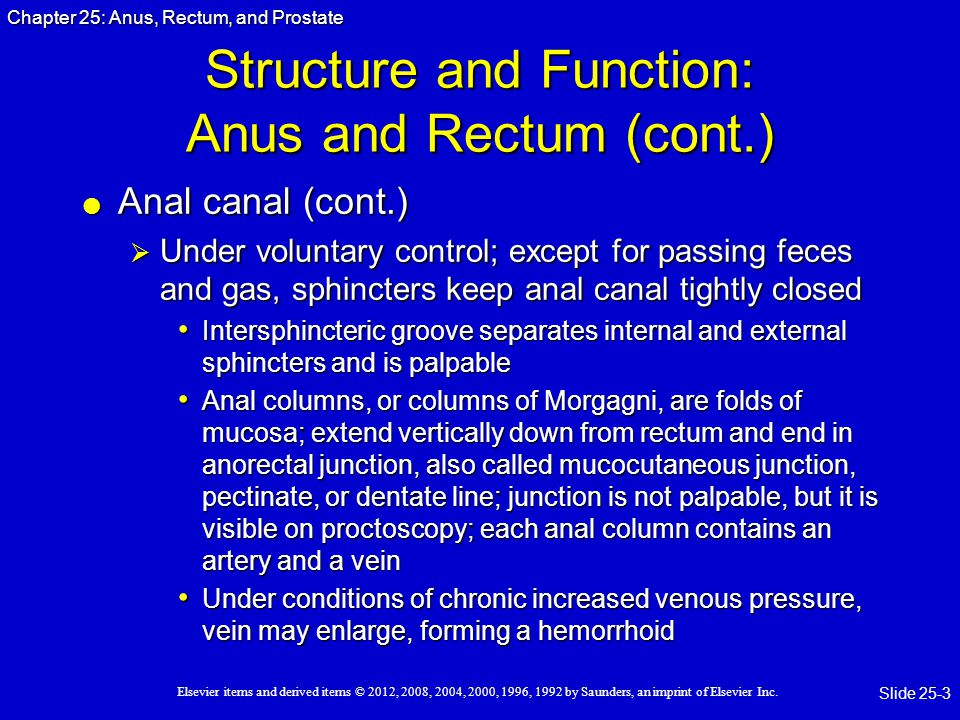 Structure and Function: Anus and Rectum (cont.)