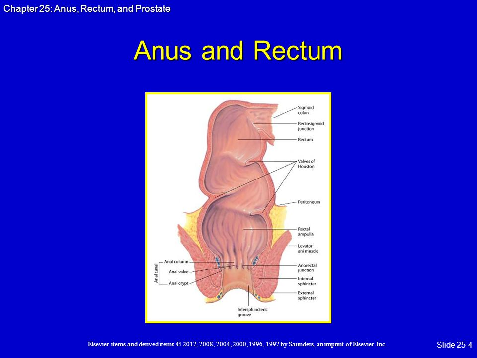 Anus and Rectum