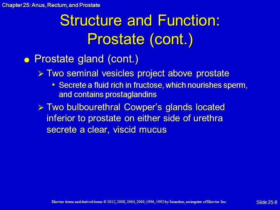 Structure and Function: Prostate (cont.)