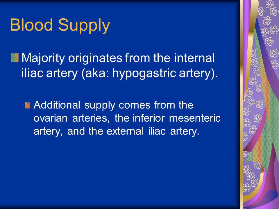 Blood Supply Majority originates from the internal iliac artery (aka: hypogastric artery).