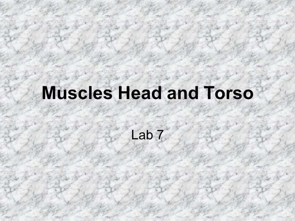 Muscles Head and Torso Lab 7